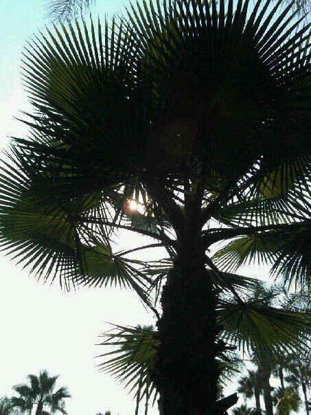 roosetree